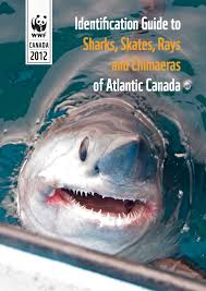 protecting canadian shark populations wwf identification guide to sharks skates rays and chimaeras of atlantic