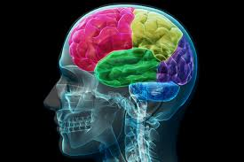 Image result for pics of a brain