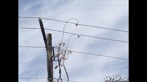 Squirrel knocks out power to 3 Tampa schools on first day of FCAT ... via Relatably.com