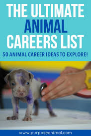 best ideas about career quiz assertive check out this ultimate animal careers list you ll 50 animal career ideas