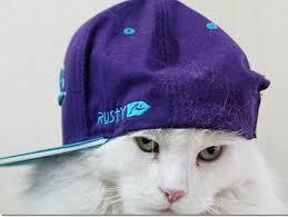 """Résultat de recherche d'images pour """"swag cat"""""""