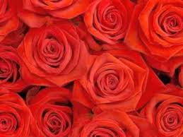 Life is Not a Bed of Roses    Abu Hakeem Bilal Davis YouTube