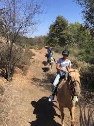 Horses in Huntington Beach Central Park?   Free Rein Foundation