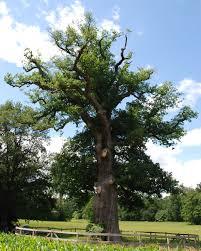 Afbeeldingsresultaat voor boom