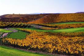 <b>Golf Course</b> Napa Valley, CA | Chardonnay <b>Golf Club</b> | Napa CA