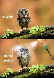funny animal meme   Tumblr via Relatably.com
