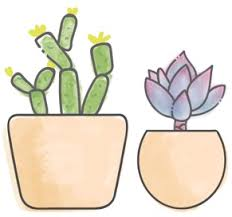 <b>Succulent</b> Studios | Monthly <b>Succulent</b> Subscription Box