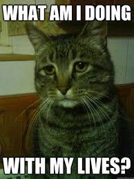 Best of the 'Depressed Cat' Meme! | SMOSH via Relatably.com