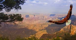 Image result for grand canyon images