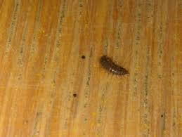 Small White Worms In Kitchen Natureplus Identifying The Following Larvae Caterpillar Like