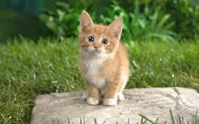 Résultat de recherche d'images pour 'chaton tigré'