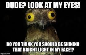 Weird Stuff I Do Potoo Latest Memes - Imgflip via Relatably.com