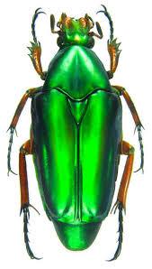Home & Living Insects <b>FREE SHIPPING</b> : Set 5 rosalia ssp <b>dried</b> ...