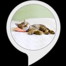 Calm My <b>Cat</b>