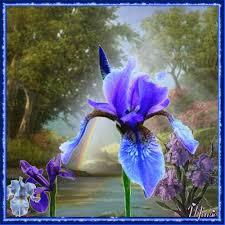 """Résultat de recherche d'images pour """"gifs avec des iris"""""""