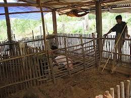 Pig housing design   Natural Pig FarmingThe key elements of a NPF housing design