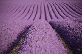 Provence <b>Lavender Fields</b> - A Photographer's Guide to Valensole ...