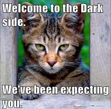 Welcome to the Dark Side - Cat - Memes Comix Funny Pix via Relatably.com