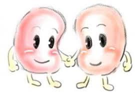 「腎移植」の画像検索結果