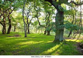 Image result for brocton coppice cannock chase