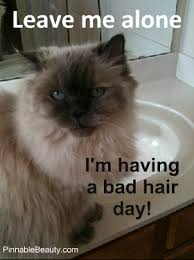 Bad Hair Day Cat Meme | Pinnable Beauty via Relatably.com