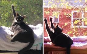 Картинки по запросу Кошки которые любят тепло больше всего на свете