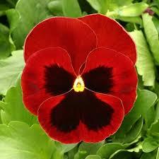 Image result for pensamientos flor