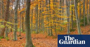 Climate crisis making <b>autumn</b> leaves <b>fall</b> earlier, study finds | Trees ...