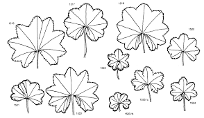 Fam. Onagraceae - florae.it