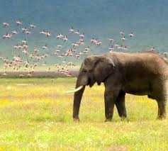 free wildlife essays and papers   helpme save the animals  wildlife essays   helpme