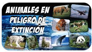 Resultado de imagen de DIBUJOS ANIMALES PELIGRO EXTINCION