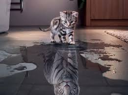 Image result for image cat and tiger