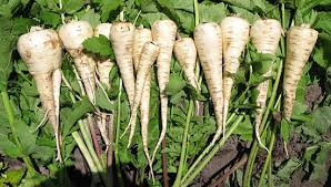 normal parsnips