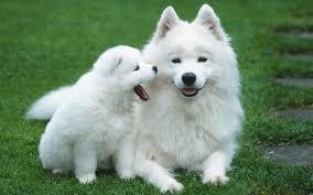 Resultado de imagem para fotos de cachorros fofos
