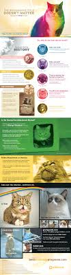why the internet loves cats infographic adweek infographic by best sociology