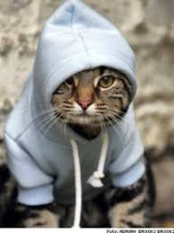 Image result for rapping cat