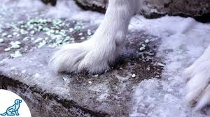 <b>Dog</b> Paw Tips For Winter - <b>Professional Dog Training</b> Tips - YouTube
