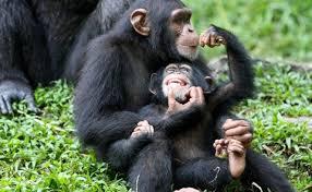 ape க்கான பட முடிவு