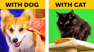 LIFE WITH DOG VS <b>LIFE WITH CAT</b>. Corgi life    Relatable facts by 5 ...