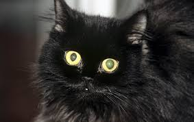 Вся правда о <b>черных</b> кошках: приметы и мифы
