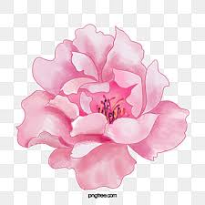 <b>Pink Flower</b> PNG Images | Vector and PSD Files | Free Download on ...