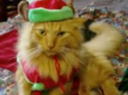 <b>Funny Christmas Cats</b> Sing Deck the Halls | Fa La La - Jingle Cats ...