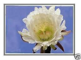 "<b>14.0</b>""<b>LCD Screen For</b> Dell Latitude 5480 5488 FHD 1920X1080 ..."