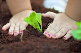 Resultado de imagem para plantando sementes