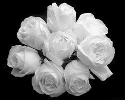 صورة تفسير الورد الابيض بالحلم