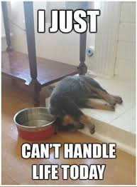 I'm Dog Tired. | Cute Animal Memes | Pinterest | Dogs, Mondays and Lol via Relatably.com