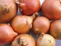 Onion - Pukekohe <b>Longkeeper</b> ONIPKL   Awapuni Nurseries   <b>New</b> ...