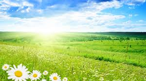 Image result for free spring themed clip art without background