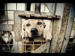 תוצאת תמונה עבור heartbroken dog