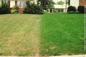 Image result for picture of dry and green lawn
